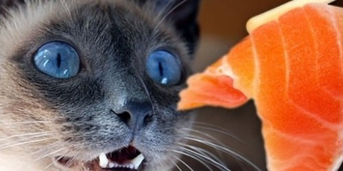 031cats-happy-food-610x250